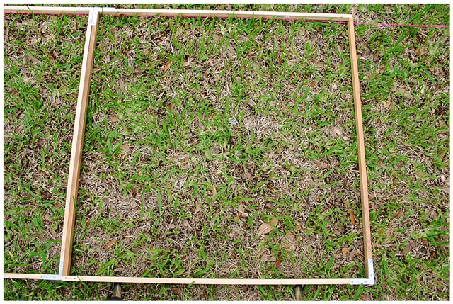 Planting Into the Grid, 2009 Row 2, Image 33, July 24, 2010