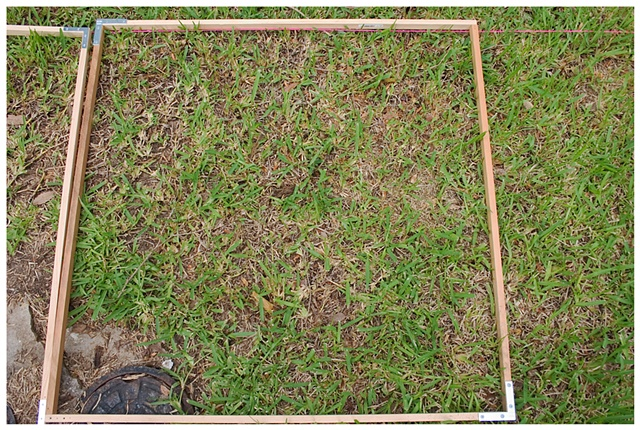 Planting Into the Grid, 2009 Row 2, Image 6, July 24, 2010