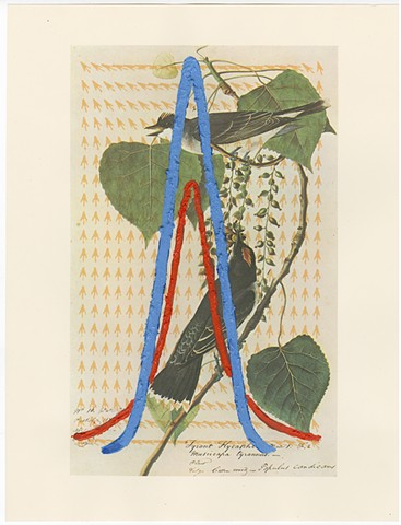 Audubon Print, Algoritmic art, inkjet print with painting, diagrams, algorithmic beauty plant, calligraphy, Steven Breaux.