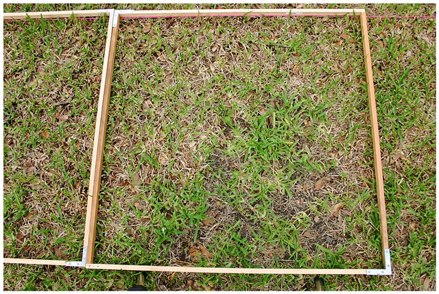 Planting Into the Grid, 2009 Row 2, Image 28, July 24, 2010
