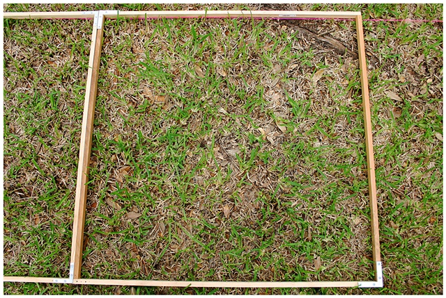 Planting Into the Grid, 2009 Row 2, Image 31, July 24, 2010