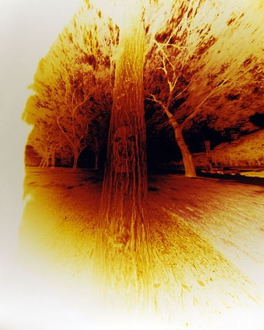 Unidentified Face on Tree (negative on Type C paper) 160 degree wide angle pinhole camera 1999