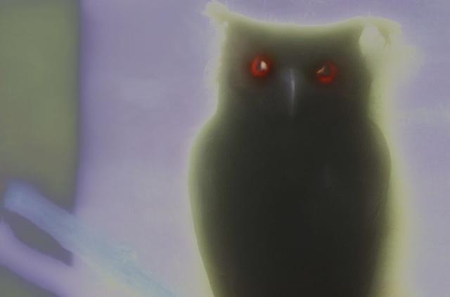 "Owl 2011 zone plate photograph archival pigment print 20""x13"""