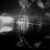 Underwater Reflection 1 1981
