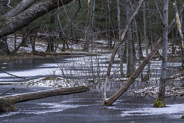 2012 Ice Catskill Mountain Winter Swamp Photo