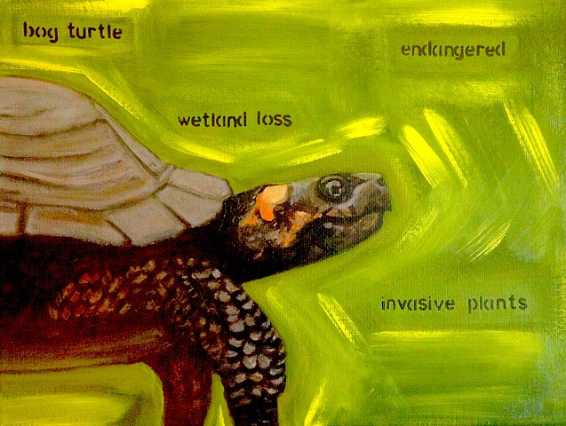 Bog Turtle / Climate Change Series #2