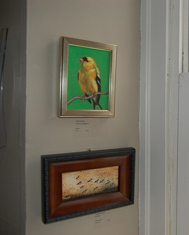 American Goldfinch at the Newburyport Art Association