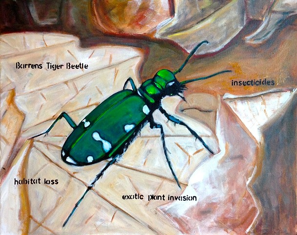Endangered Barrens Tiger Beetle