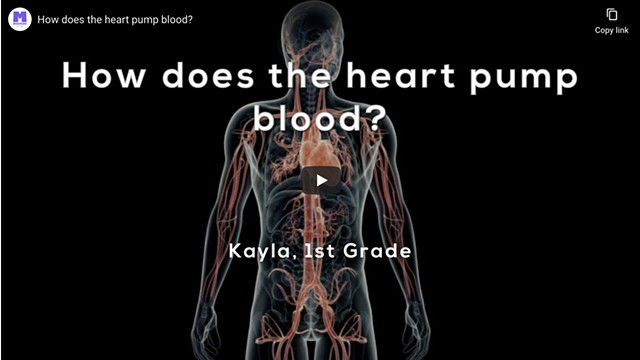 Explainer Video: How does the heart pump blood?