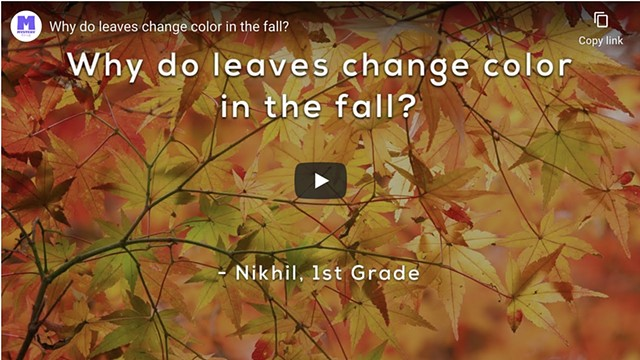 Explainer Video: Why do leaves change color in the fall?