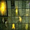 Imprints (entombed)