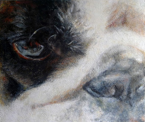 Encaustic portraits animals texas bulldogs