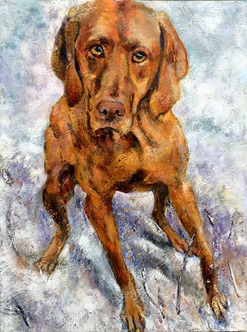 vizsla dog portrait dallas patty rooney