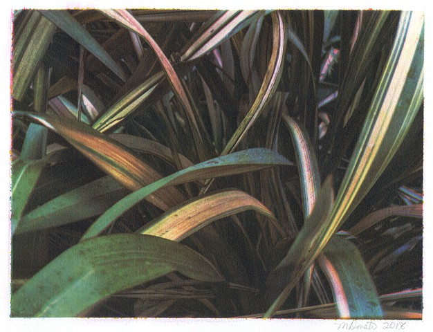 3-color gum bichromate print on Fabriano Artistico 100% cotton paper.