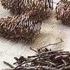 cocoons/tree bones