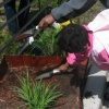 Victory Garden Planting