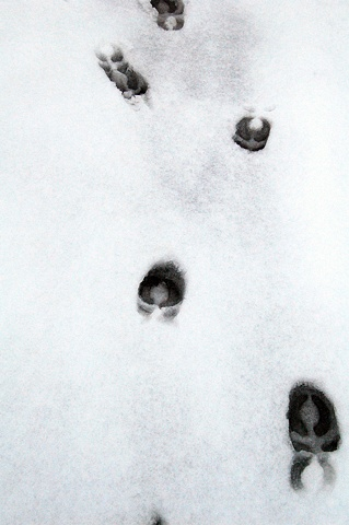 Outliers (Caribou track, Lachine, Canada)
