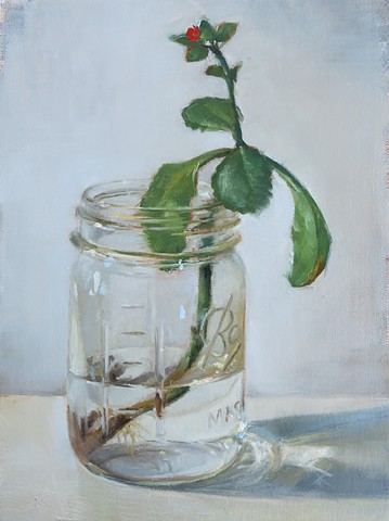 oil painting, still life, Mason Jar, plant cutting