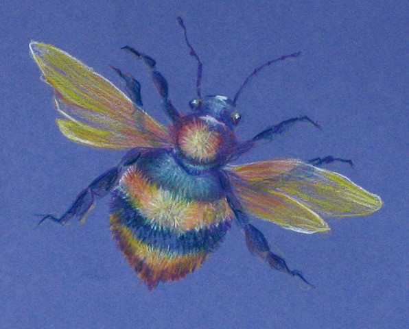 Pencil Bee No. 1