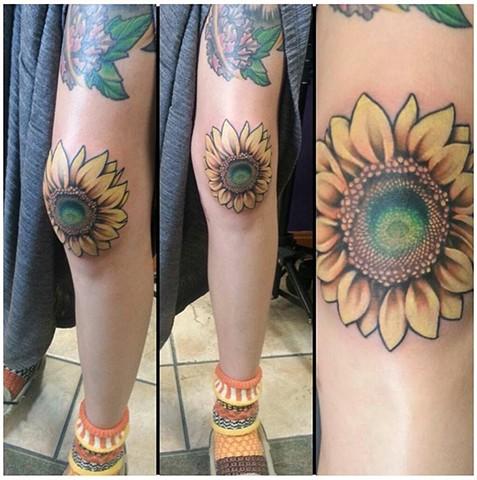 sunflower knee