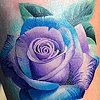 cool color rose
