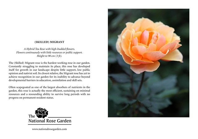 Selections From The National Rose Garden Notecard (Skilled) Migrant