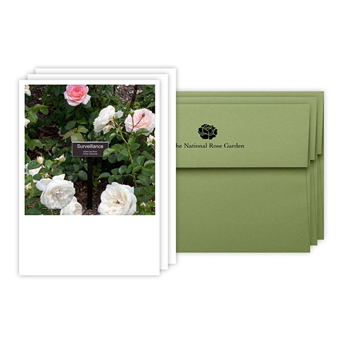 Surveillance Rose Note Cards