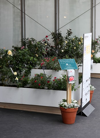 Selections From The National Rose Garden (Installation view) Art Basel Miami Beach, SCOPE Miami, FL.