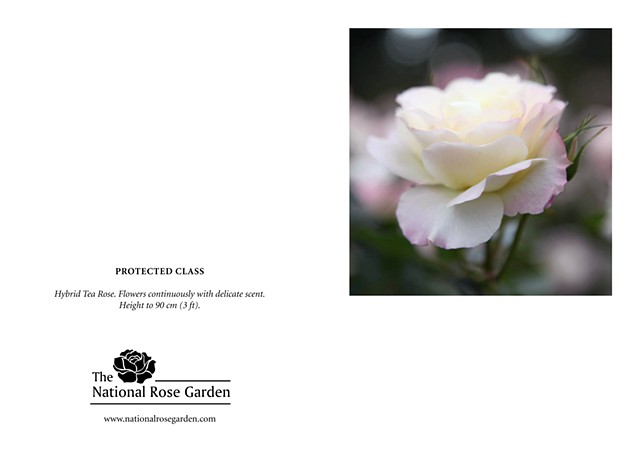 Selections From The National Rose Garden Notecard Protected Class