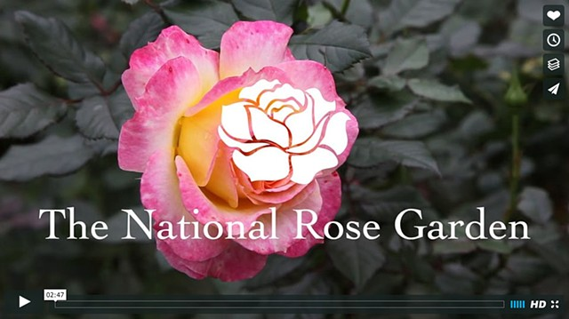 Welcome to The National Rose Garden