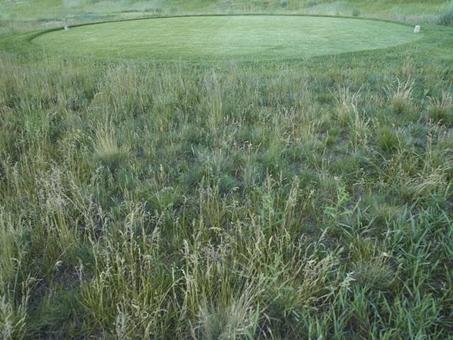 landscape intervention 4