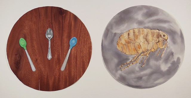 Untitled (spoons & flea)
