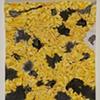 Yellow Crumple Drawing