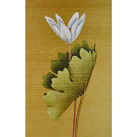Bloodroot on gold