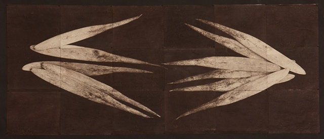 Eighteen van dyke brown prints of ash seeds