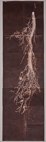 Vandyke Brown Prints, a historical and alternative photographic process from a scanned object