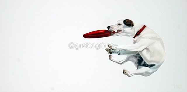 Jack Russell terrier playing frisbee