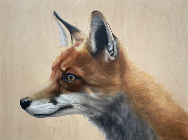 The Wiley Fox