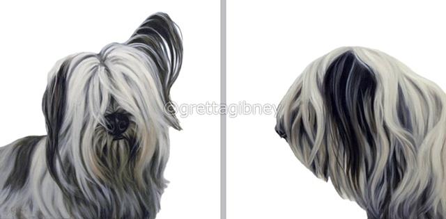 mugshot- tibetan terrier/ diptych