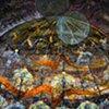 detail - Winter House for Sheltering Moths - Longest Night