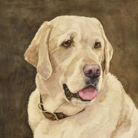 Watercolor painting of Yellow Lab, Yellow Labrador Retriever by Edie Fagan