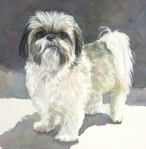 Shih Tzu, Shitzu, shihtzu, watercolor painting by Edie Fagan, dog, portrait, adored dogs