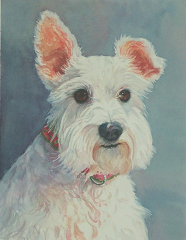 dog portrait of schnauzer by Edie Fagan Adored Dogs