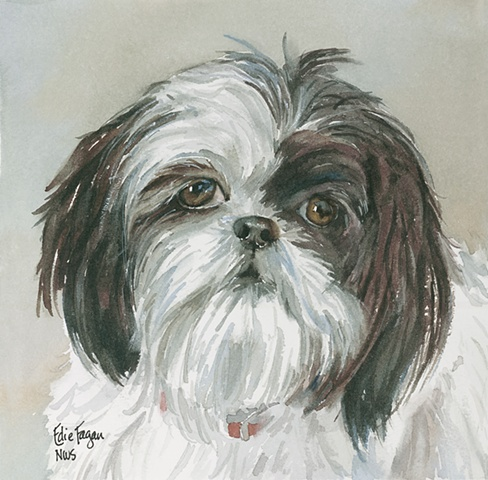 Edie Fagan Adored Dogs watercolor portrait of dog watercolor painting of black and white shih tzu dog