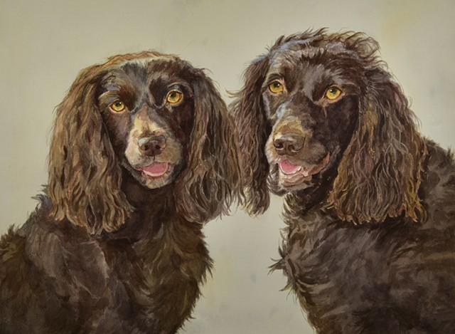 Boykin Spaniels watercolor painting dog portrait by Edie Fagan
