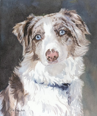 Edie Fagan Adored Dogs watercolor painting of dog watercolor painting of Austrailian Shepherd dog blue eyes