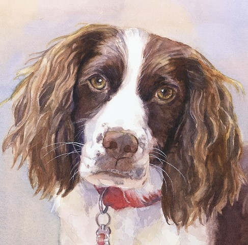 English Springer Spaniel, dog, watercolor painting by Edie Fagan Adored Dogs