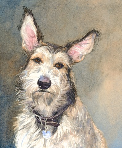 Berger Picard shepherd dog painting watercolor by Edie Fagan Adored Dogs