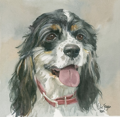 Edie Fagan Adored Dogs watercolor portrait of dog watercolor painting of cocker spaniel dog
