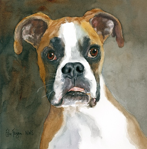 Edie Fagan Adored Dogs watercolor painting of dog watercolor painting of boxer dog